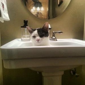 more like Cat Nicholson.