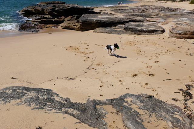 Benny the beach dog