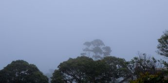 Such fog