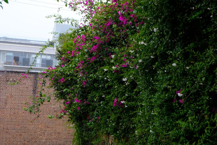 I want to live near a flower wall.
