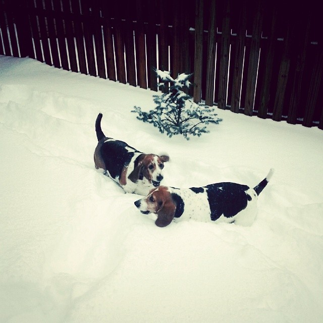 I got to play in so much snow. My dog, Lucy, and her sister Ellie, were almost buried in it.