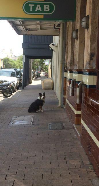 Footpath dog!