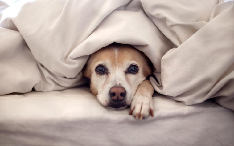 Hello, Doona Doggie
