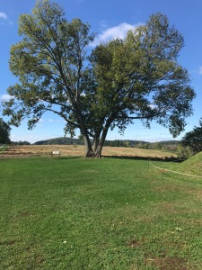 Valley Forge! Behind that tree, the troops filled the field for battle training