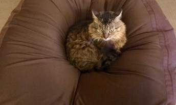 bean-cat